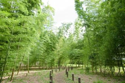 おくらやまの森緑地の画像1