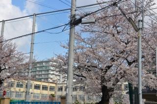 京都市立七条第三小学校の画像1