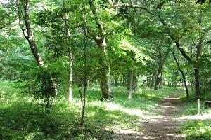 源四季の森の画像1