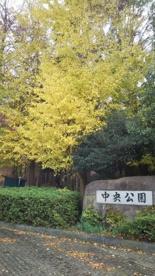 茅ヶ崎市 中央公園の画像1