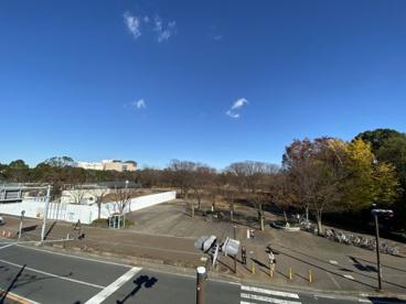 茅ヶ崎市 中央公園の画像3