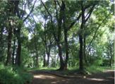 井田山緑地