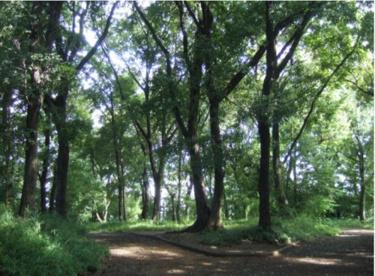 井田山緑地の画像1