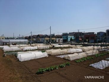 イガさんの畑の画像3