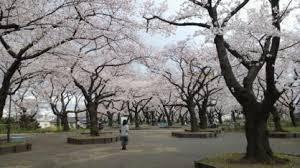 幸ヶ谷公園の画像3