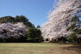 東京都目黒区立駒場公園