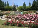 靱公園 バラ園