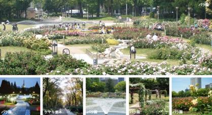 靱公園 バラ園の画像1