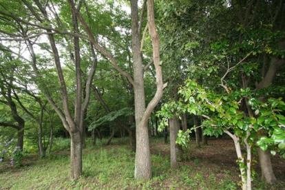 都立野川公園の画像3