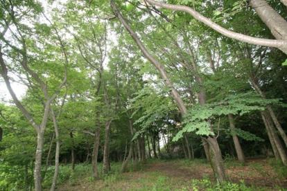 都立野川公園の画像4
