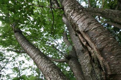 都立野川公園の画像5