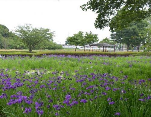 あずま水生植物公園の画像