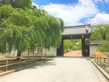 醍醐寺の画像3