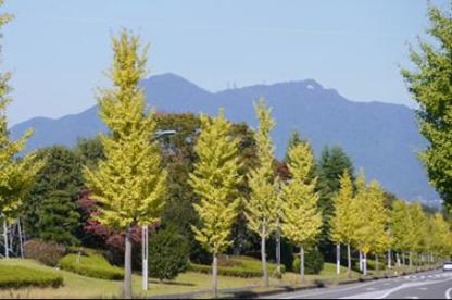 いちょうの丘公園の画像1