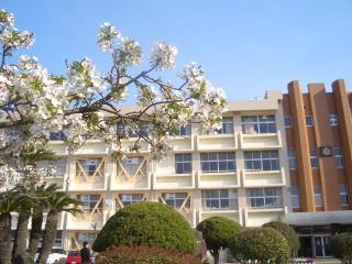 倉敷市立 倉敷第一中学校の画像1