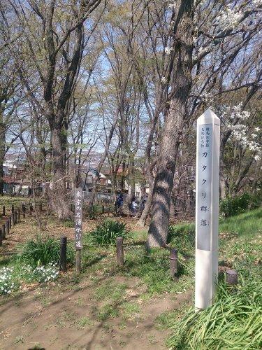 清水山の森の画像