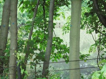 こんぶくろ池自然博物公園ふじ池エリアの画像2