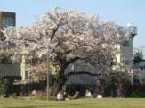 新宿区立富久さくら公園