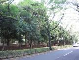 東京都立 光が丘公園
