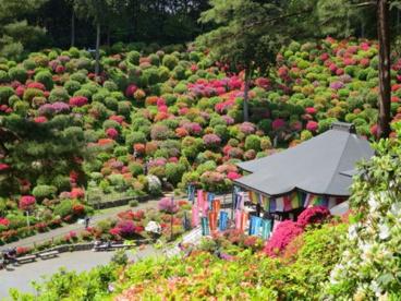 霞丘陵自然公園の画像1