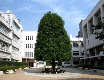 新渡戸文化中学校高等学校の画像1