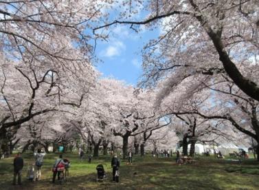 小金井公園の画像1