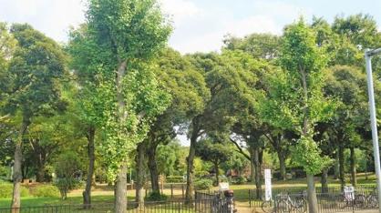 朝霞市/青葉台公園の画像3