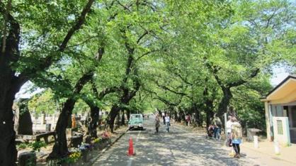 谷中霊園の画像1