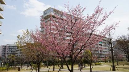 ふじみ野市/福岡中央公園の画像2