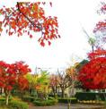 紅葉ケ丘公園
