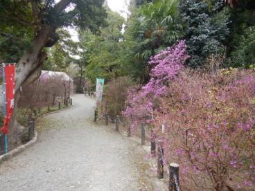 宮山公園の画像1