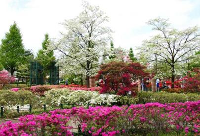 練馬平成つつじ公園の画像1