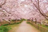 実籾本郷公園