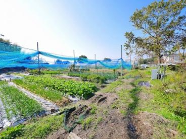 正木ふれあい農園(正木ちゃれんじ村)の画像4