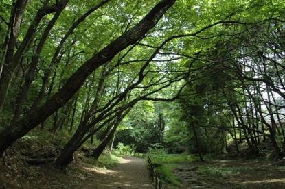 上和田野鳥の森の画像1