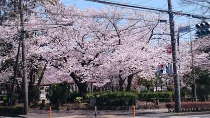 桐原公園の画像1