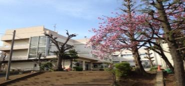 市川市立中国分小学校の画像1