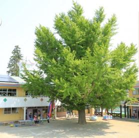 慈光幼稚園の画像1