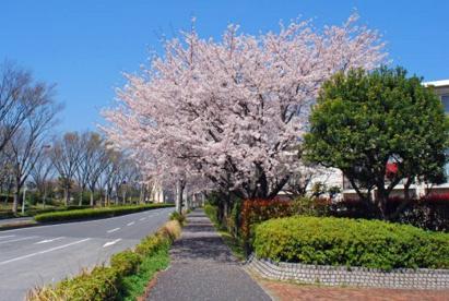 遠藤公園の画像1