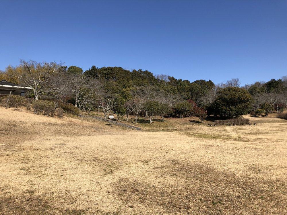 大和民俗公園の画像