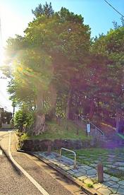 みやのくぼの森緑地の画像1