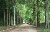 光明池緑地