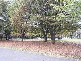 新小岩公園の画像1