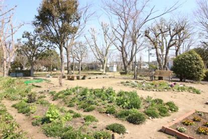 桜ニュータウン中央公園の画像1