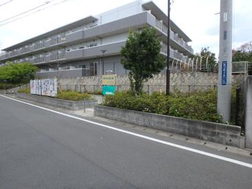 野川宮の前公園の画像1