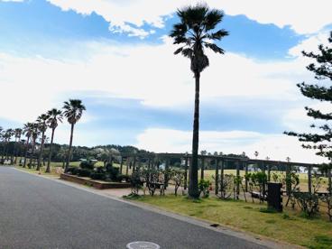 辻堂海浜公園の画像2