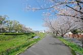瑞原 天神川沿い
