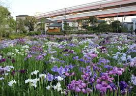 堀切菖蒲園の画像1