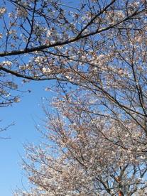 新幹線公園の画像2