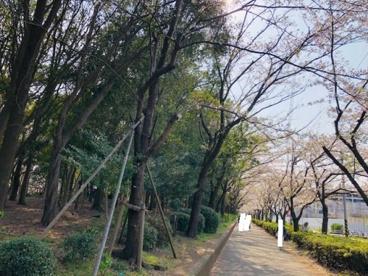 茅ケ崎市 中央公園の画像2
